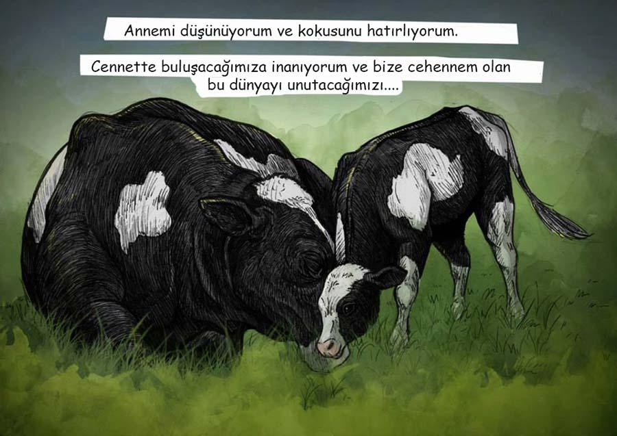 Weronika Kolinska, süt üretiminin